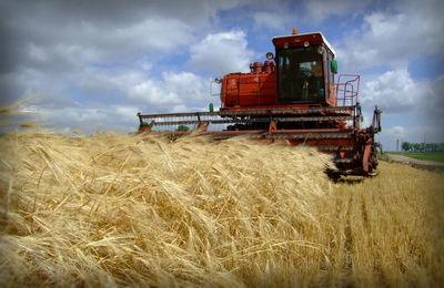 Единый сельскохозяйственный налог: что это за система налогообложения, условия применения, утрата права